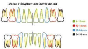 Anatomie des dents